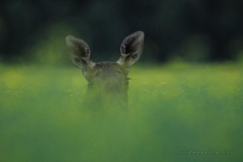 Pilk läbi roheluse