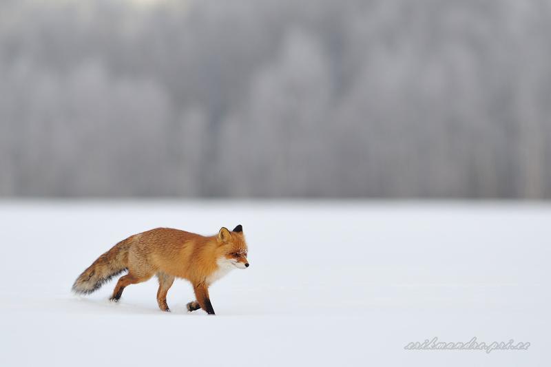 Sörk läbi lume