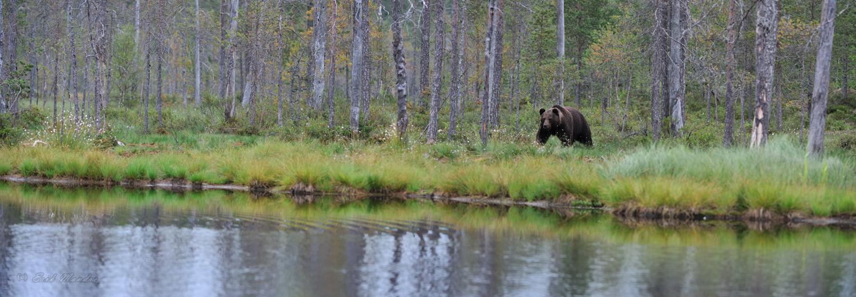 Karu omas keskkonnas