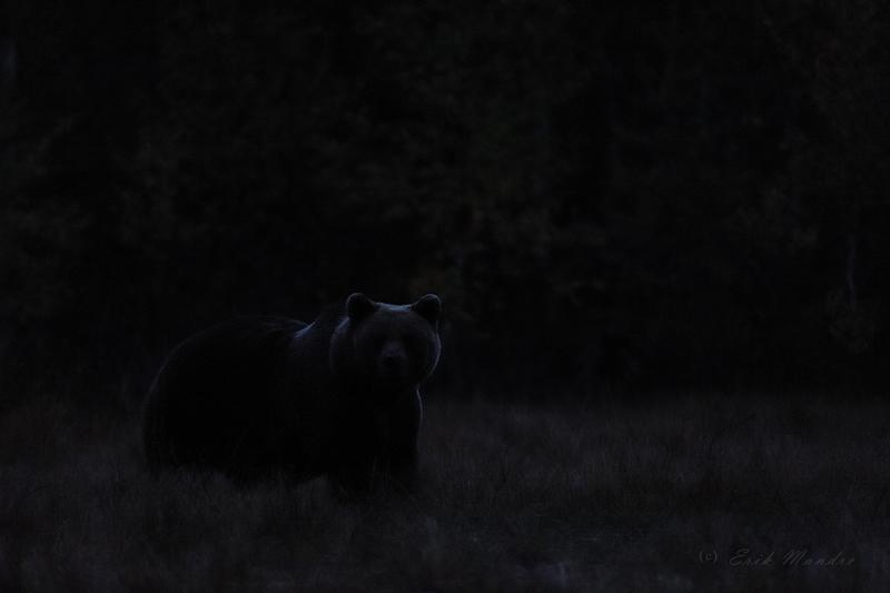 Karu õhtupimeduses