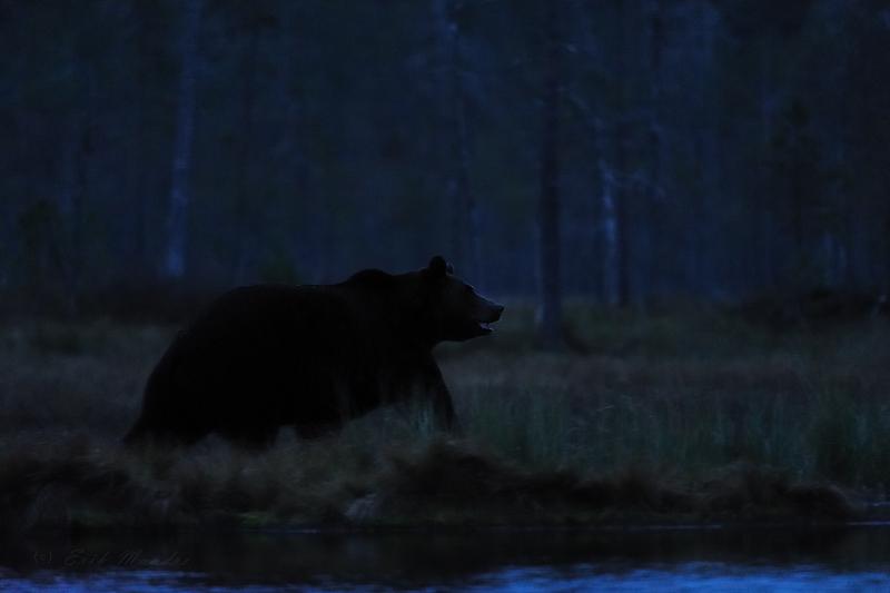 Liikumine pimeduses