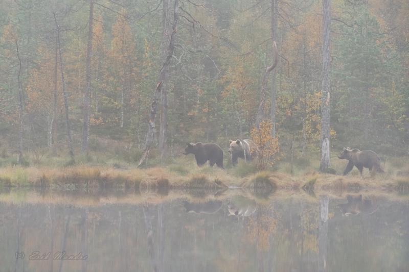 Karud sügiseses looduses