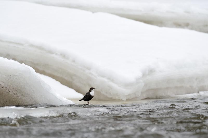 Jõeköster omas keskkonnas