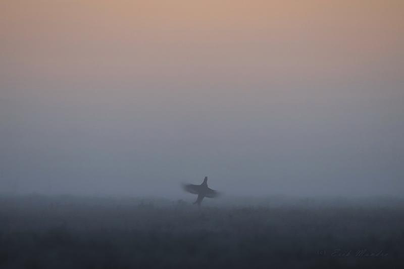Lend varajastel hommikutundidel