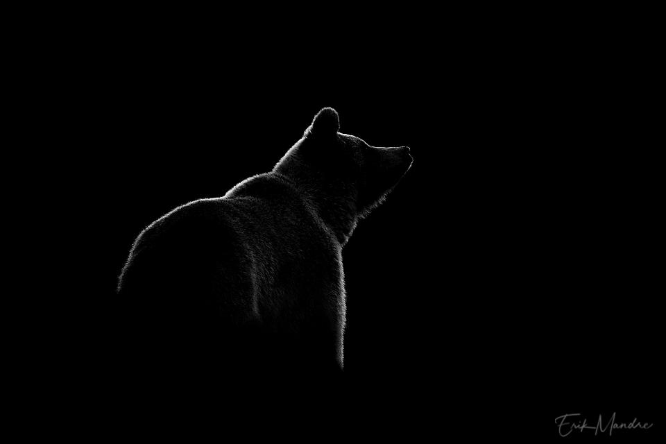 Karu kontuur