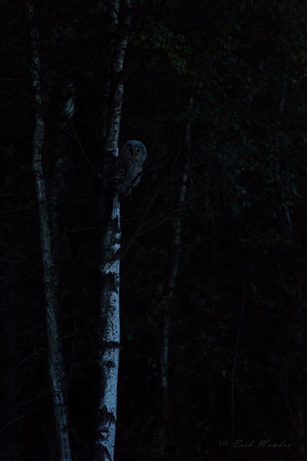 Händkakupoeg südaöises metsas