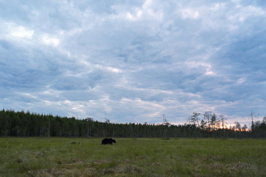 Suvine öö Põhja-Karjalas