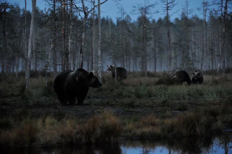 Karud öises rabas