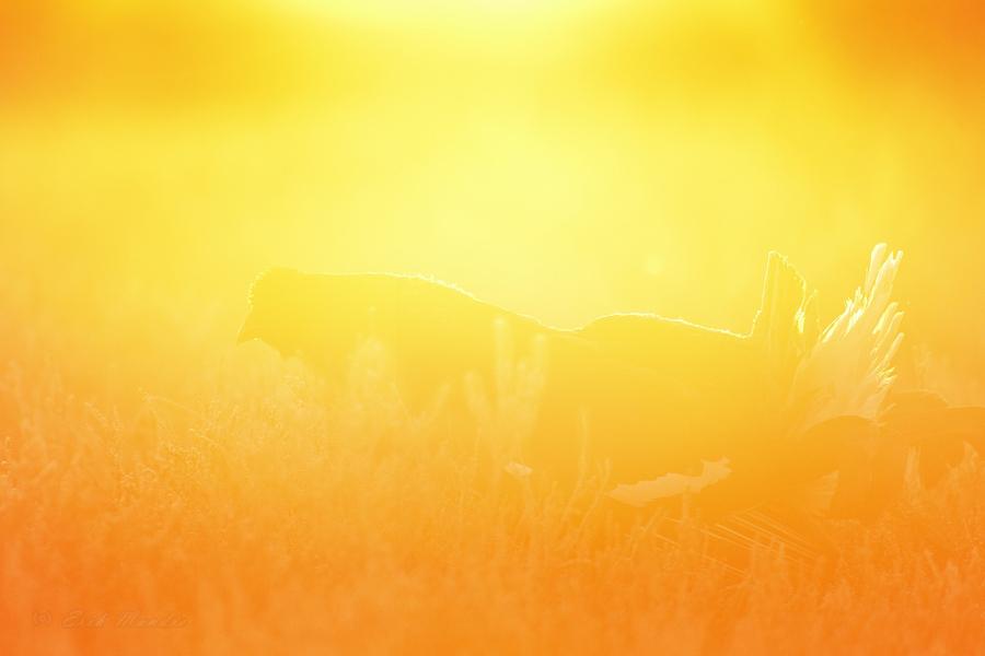 Kudrutamine päikesetõusu aegu