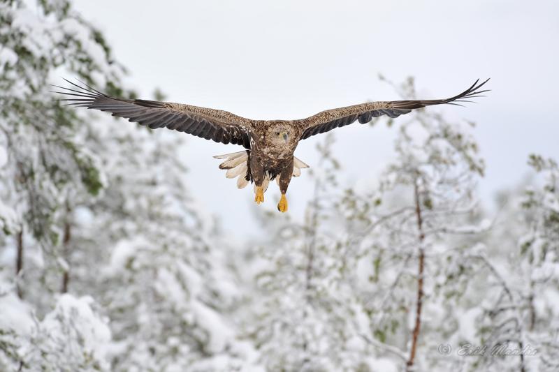Lend talvises miljöös