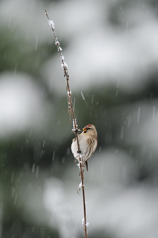 Urvalind lumesajus