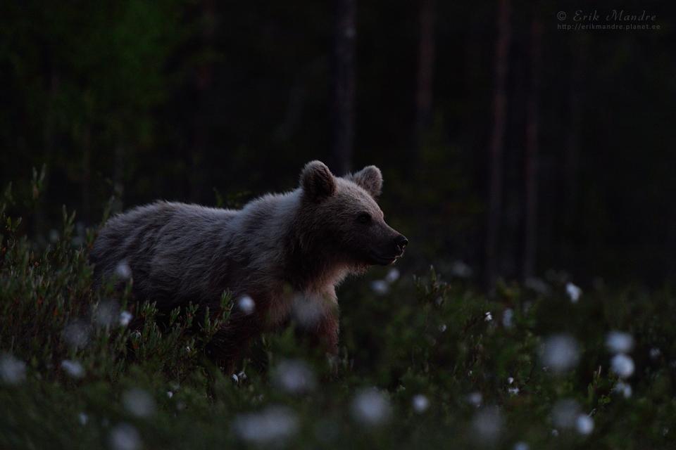 Noor karu öötunnil
