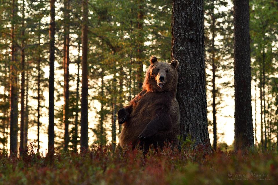 Karu mõnus elu metsas