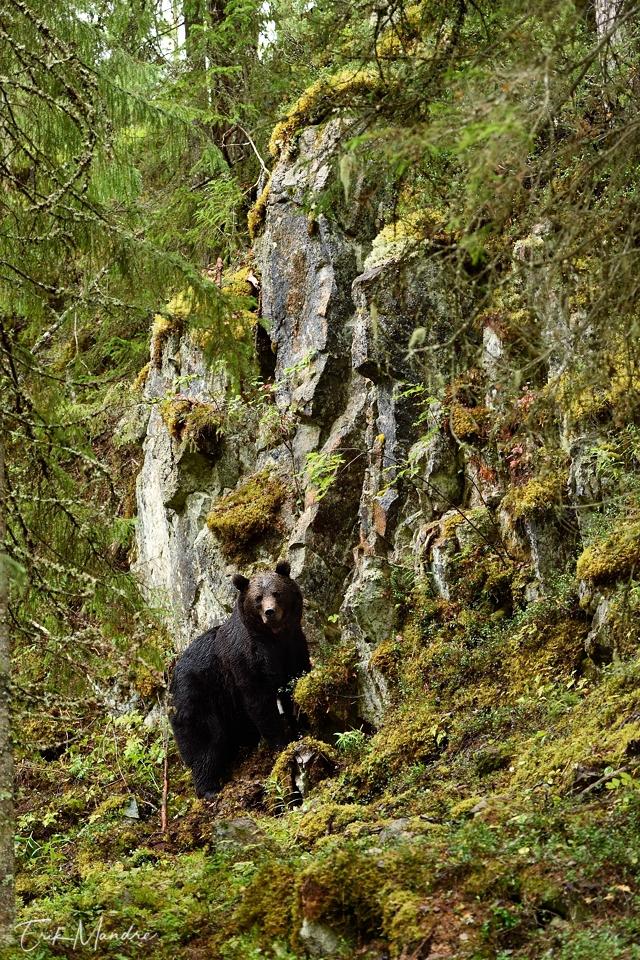 Karu kivisel metsamaastikul