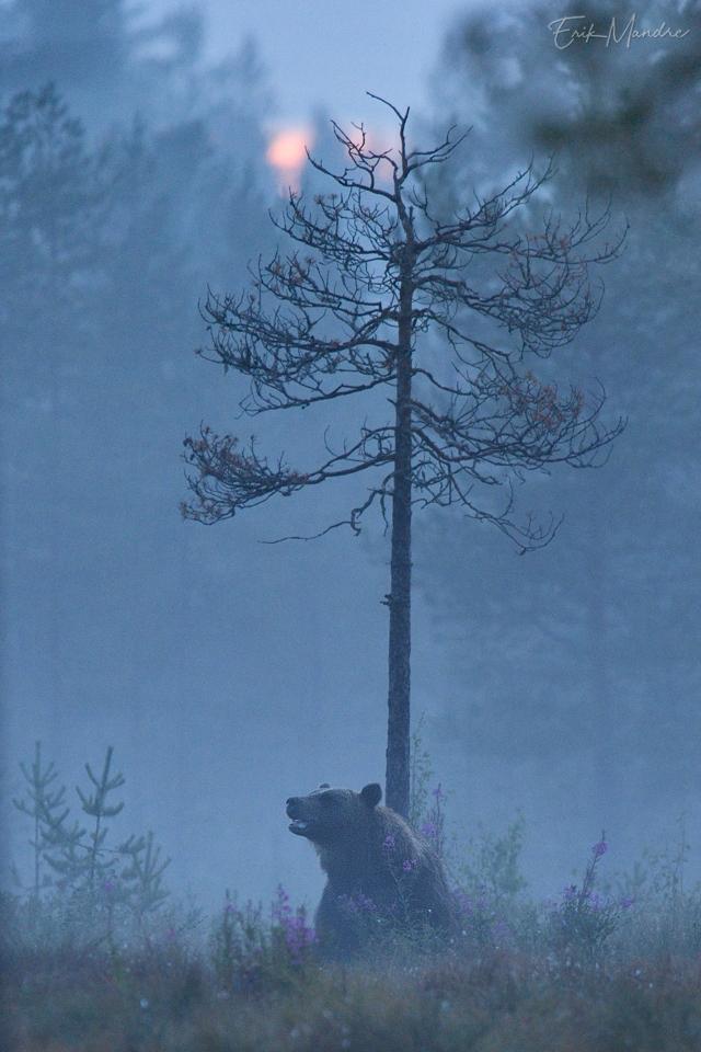 Karu puhkehetk öises rabas