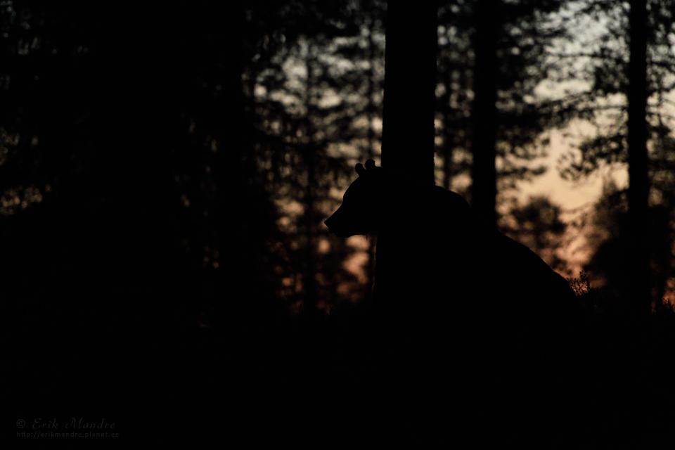 Augustiõhtuse metsa salapära