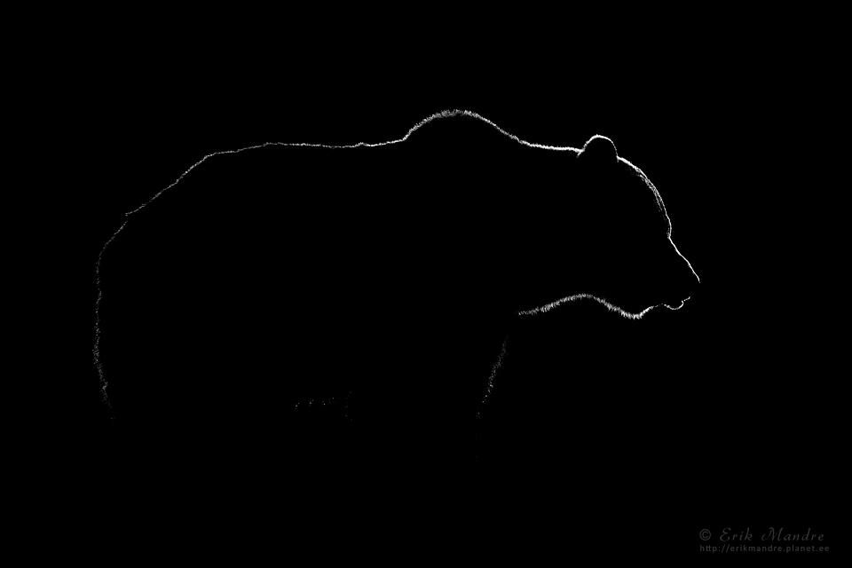 Karu siluett mustal