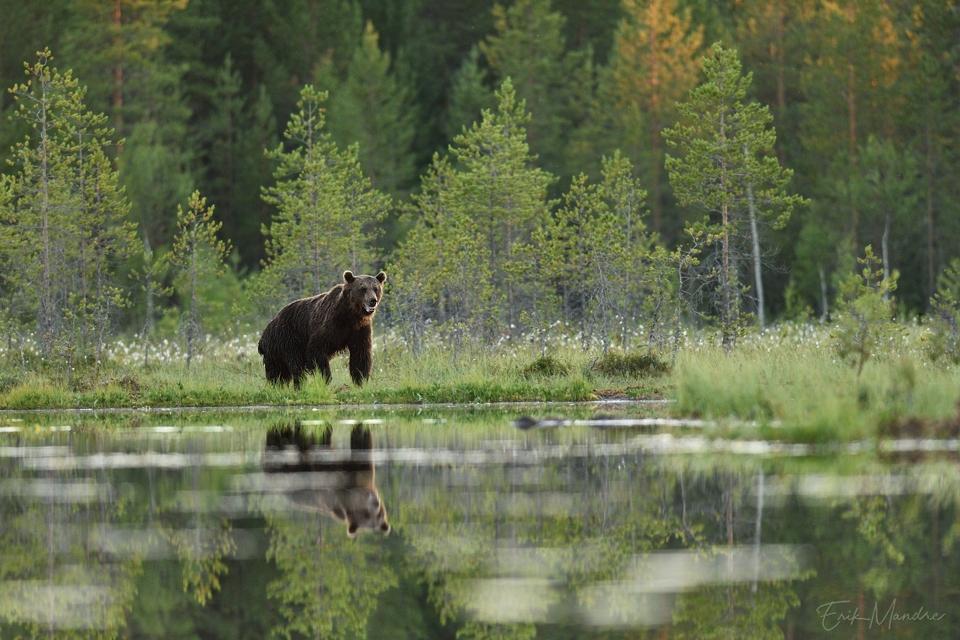 Põhjamaa looduse ilu ja võlu