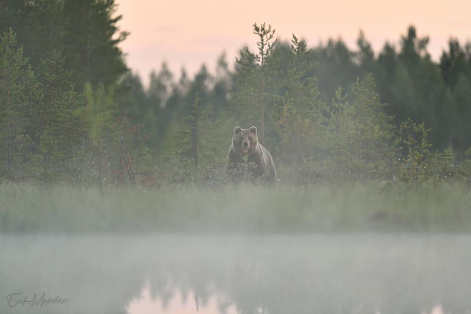 Karu varajasel hommikutunnil