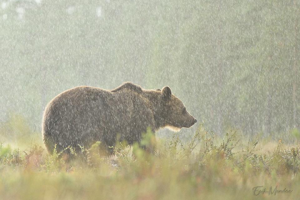 Karu vihmas