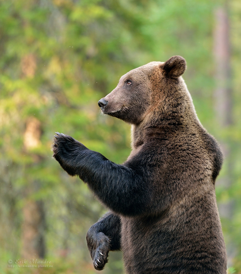 Karu tervitus