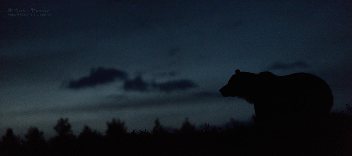 Ööelu taigas