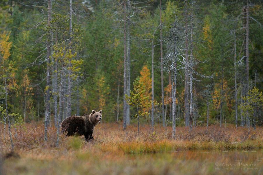 Karu sügisvärvides