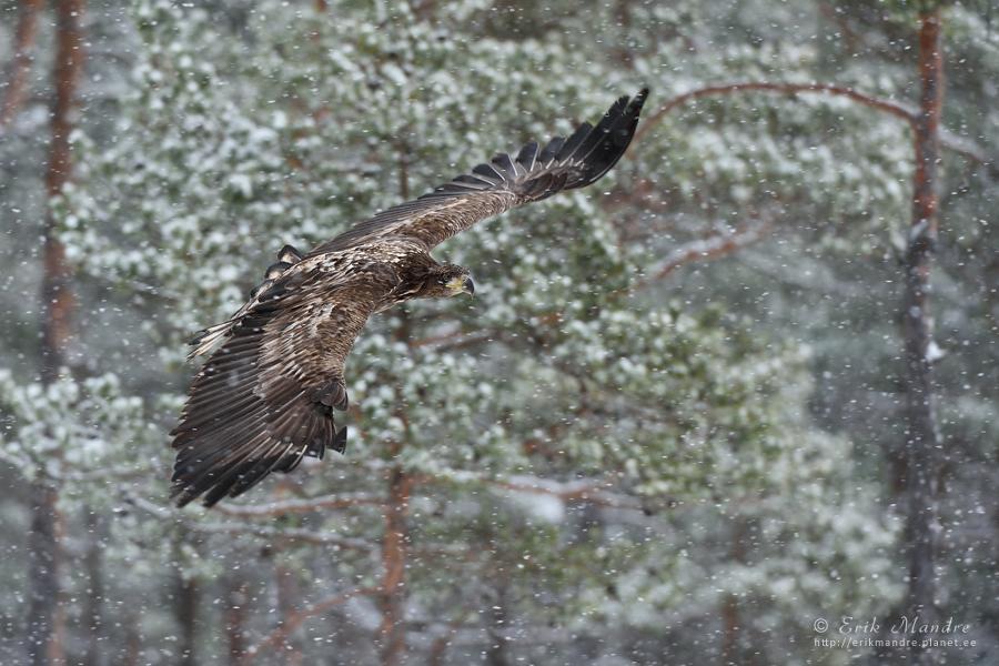 Lend läbi lumesaju