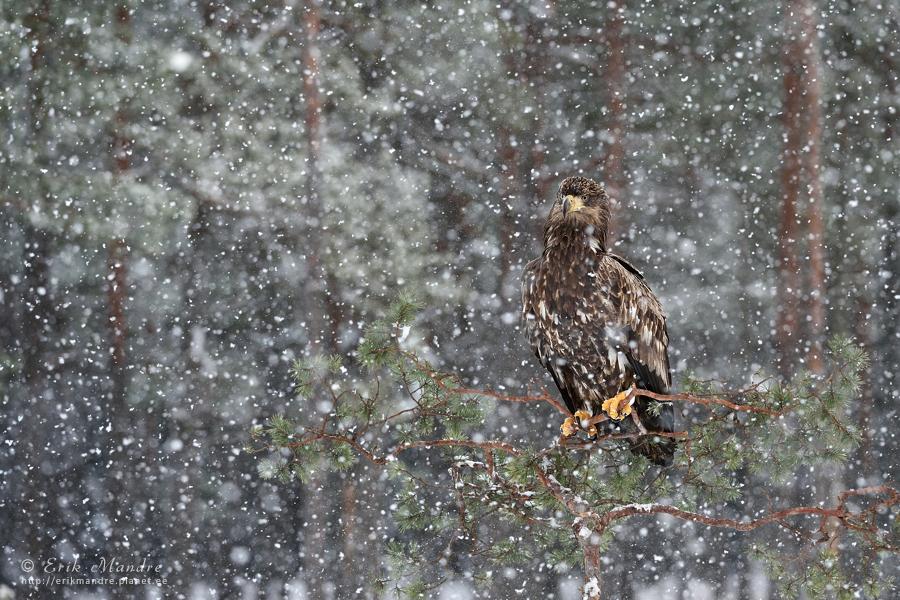 Talv oma täies hiilguses