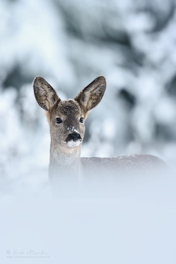 Mul on ilusad ja suured kõrvad!