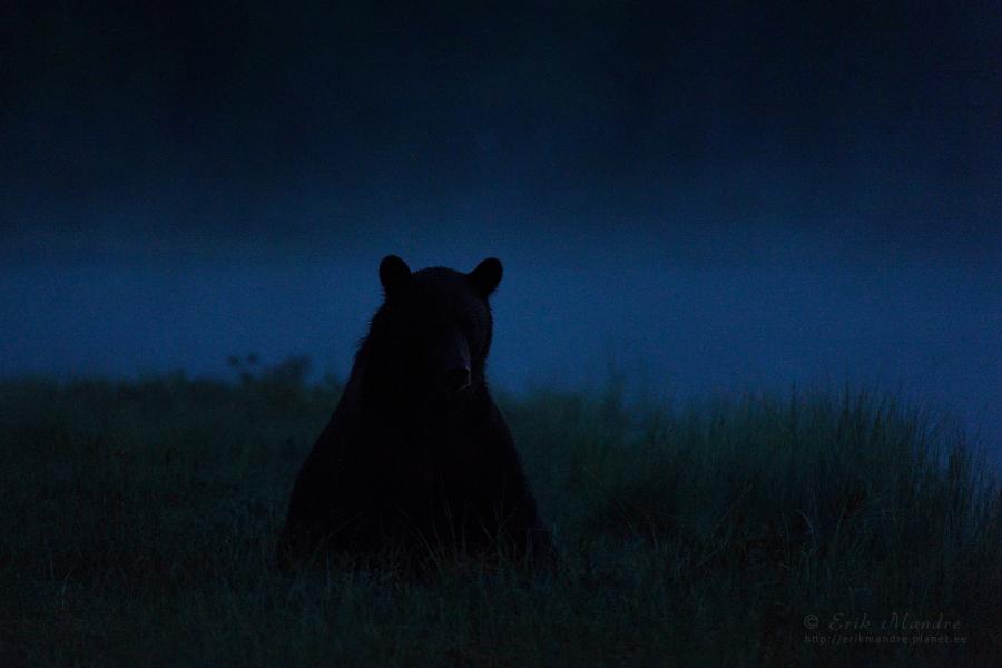 Öises üksinduses