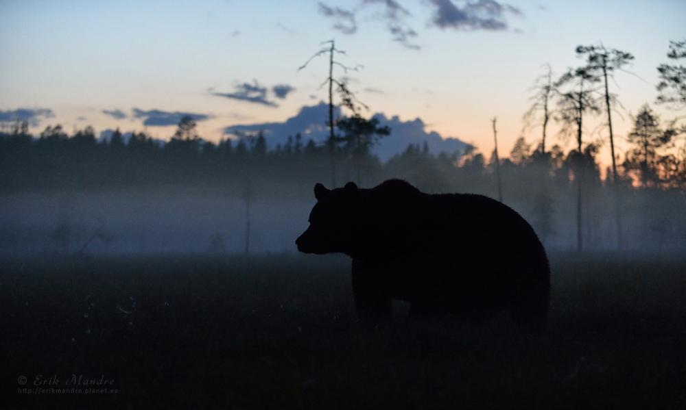 Karu öises rabas