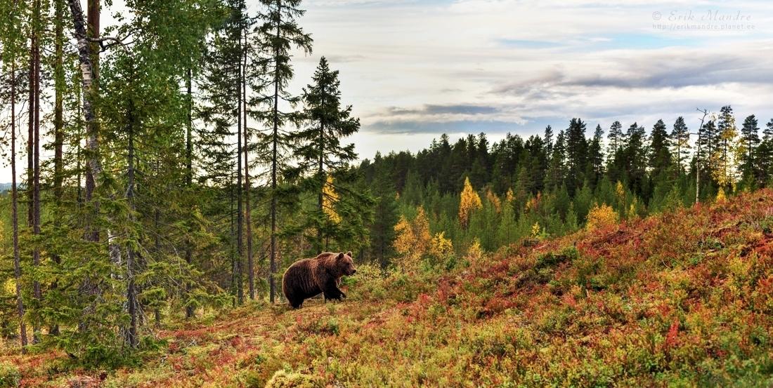 Sügisene maastik karuga