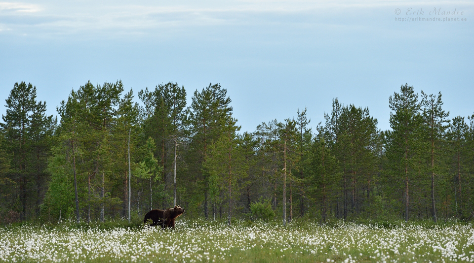 Karu suvisel rabamaastikul