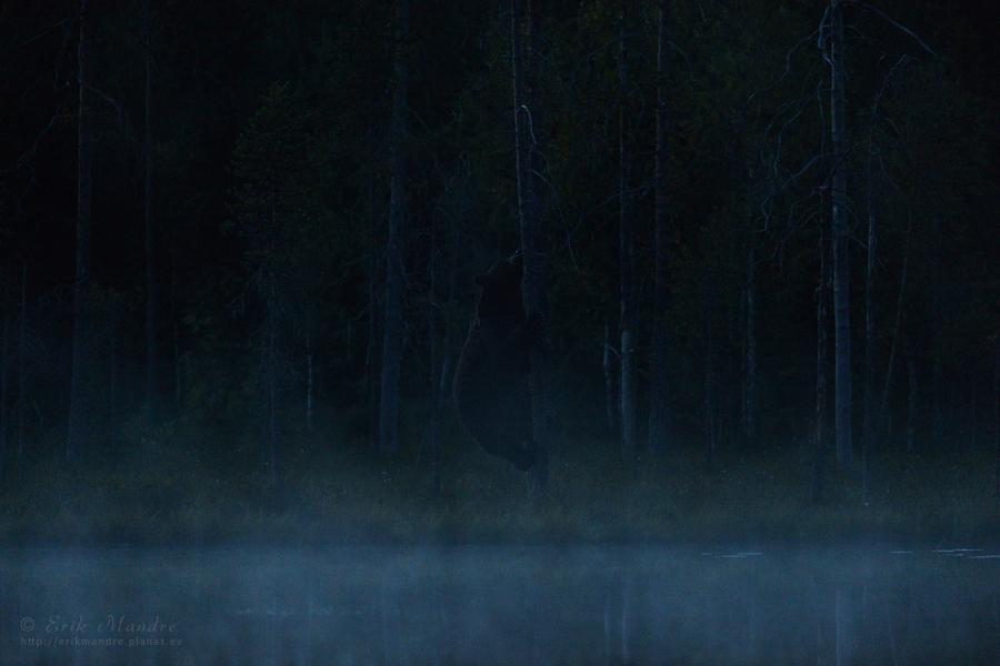 Karu öised toimetused