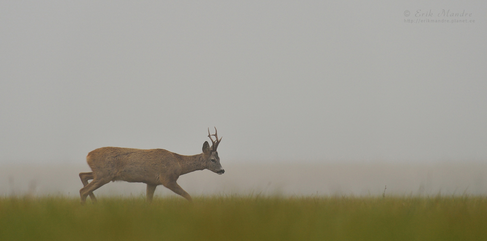 Üksik jalutaja