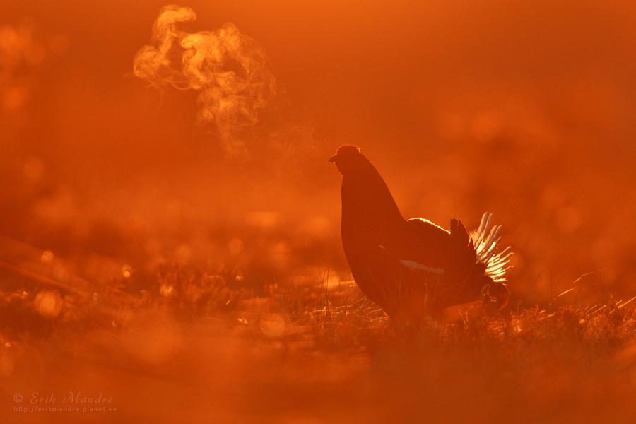 Raba miljöö päikesetõusul