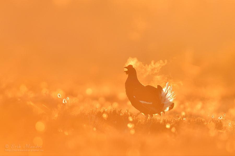 Tedremäng päikesetõusul